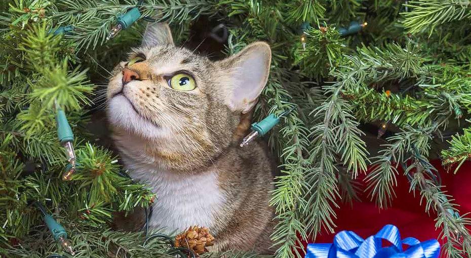 Новый год дляживотных: растения, которые приносят вред собакам икошкам