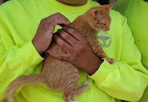 Спасибо за жизнь: котёнок часами обнимает мусорщика, который его спас