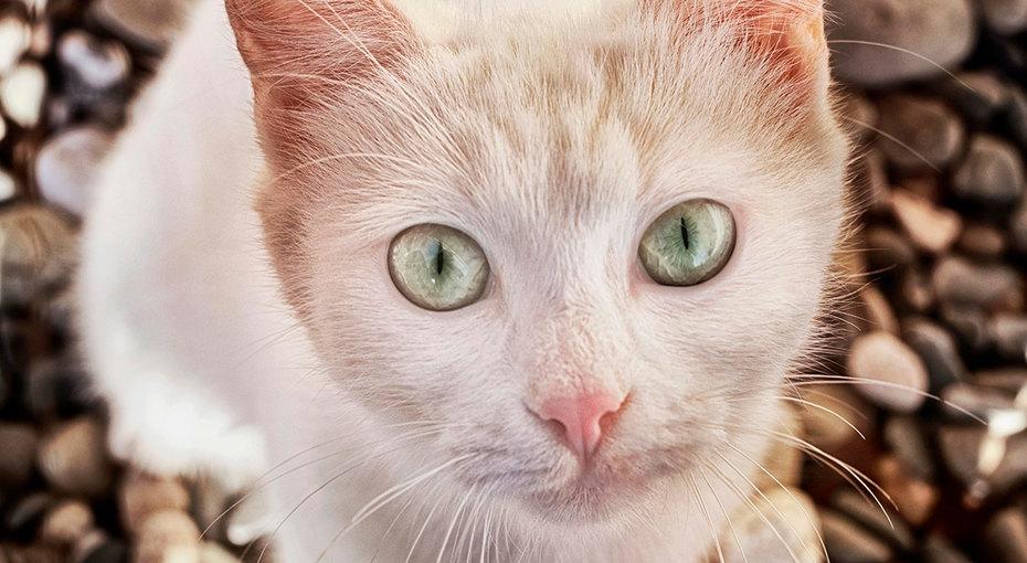 Бездомный кот умолял прохожих купить ему еды — а получил икорм, иновый дом
