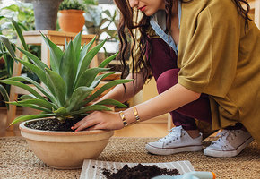 Очищение и оздоровление: 6 домашних растений, которые нам нужны