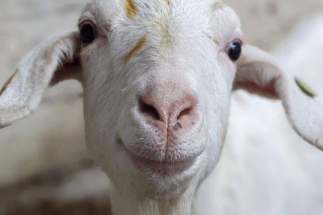 Ферма вшутку предложила услугу — видеозвонок скозами. Ивот что изэтого вышло