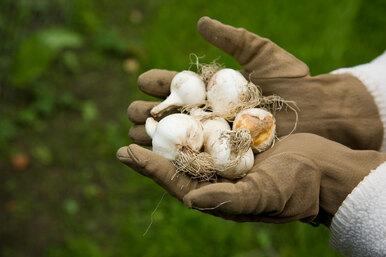 Мастер класс: сажаем луковичные цветы