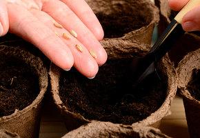 Как купить хорошие семена? Просто следуйте этим советам