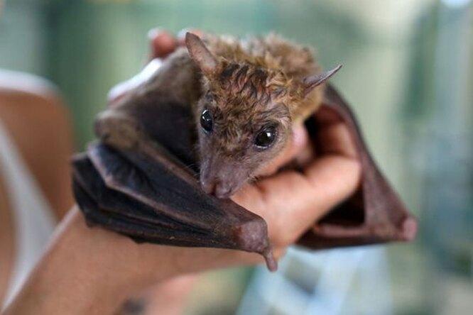 Волгоградский школьник приютил 203 летучих мыши, выброшенных напомойку