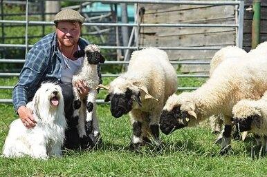 Собака пыталась стать пастухом уовец, но провалилась — позабавной причине