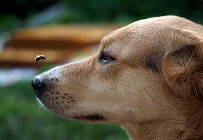 Больше ни-ни: 15 собак, которые познакомились с пчелами и пожалели об этом