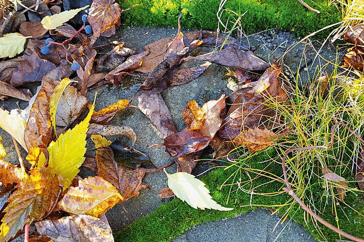 Cад перед разлукой. Завершаем сезон на даче: обрезка деревьев, уборка в саду и уход за цветником