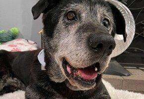 «Он уже сдался»: новая семья вернула любовь к жизни пожилому псу с онкологией