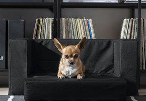 ИКЕА запустила линию товаров иаксессуаров длядомашних животных