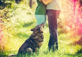 Владелиц собак чаще приглашают на свидания (а кошатницам и так хорошо!)