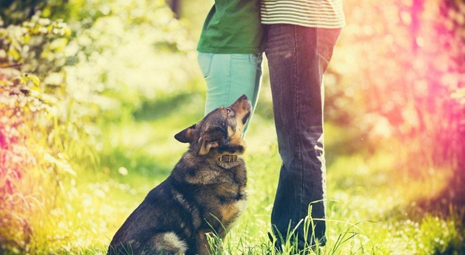 Владелиц собак чаще приглашают насвидания (а кошатницам итак хорошо!)