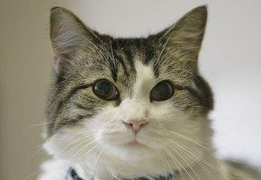 Я буду рядом: кот Оскар проводил в последний путь более 100 человек