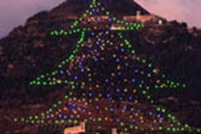 Итальянцы создали самую большую елку