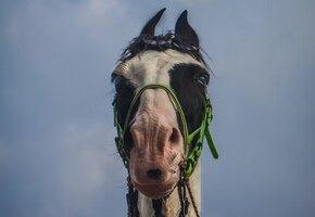 Вырвалась на свободу: В США лошадь сбросила седока и сбежала со скачек