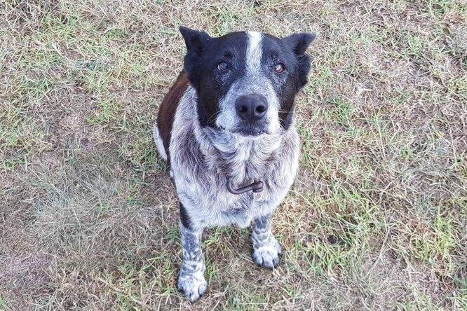 Глухой, почти слепой пес ночью согревал пропавшую девочку, а утром привел помощь
