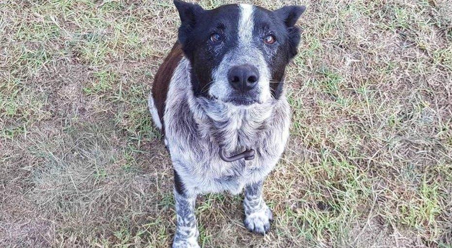 Глухой ипочти слепой пес всю ночь согревал пропавшую девочку, а утром привел кней помощь