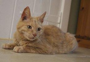 Кот вернулся к хозяйке после 11 лет разлуки