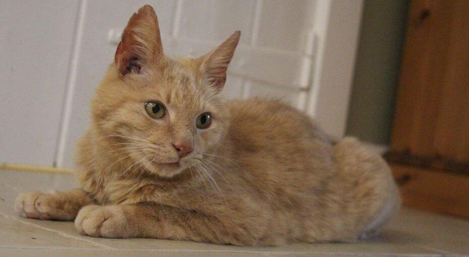 Кот вернулся кхозяйке после 11 лет разлуки