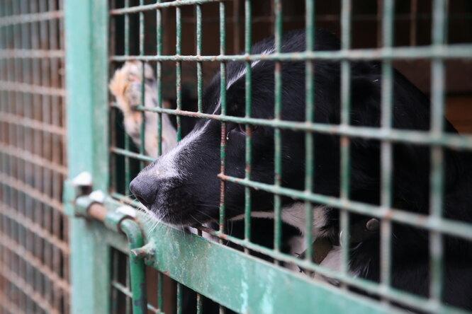 Контактных зоопарков больше небудет. Закон ожестоком обращении сживотными принят вГосдуме