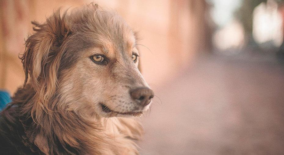 Всемирный день бездомных животных: как им можно помочь
