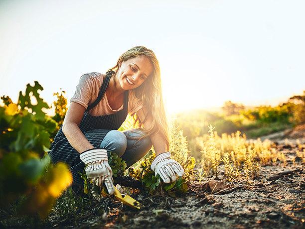 Как сделать компост на даче своими руками, быстро и без затрат?