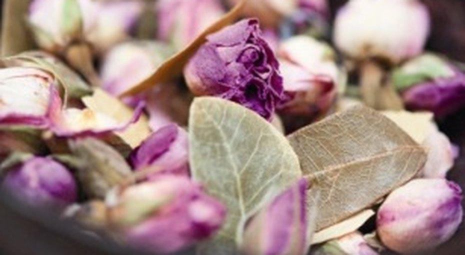 5 необычных идей длясоздания зимнего сада