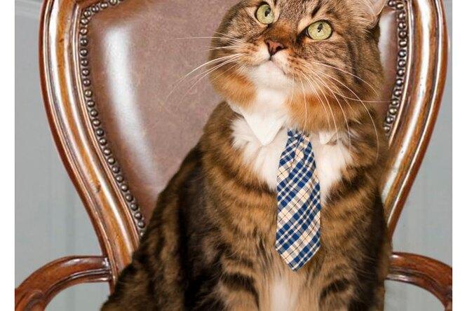 Кот — депутат