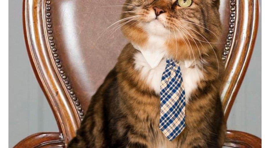 Кот - депутат
