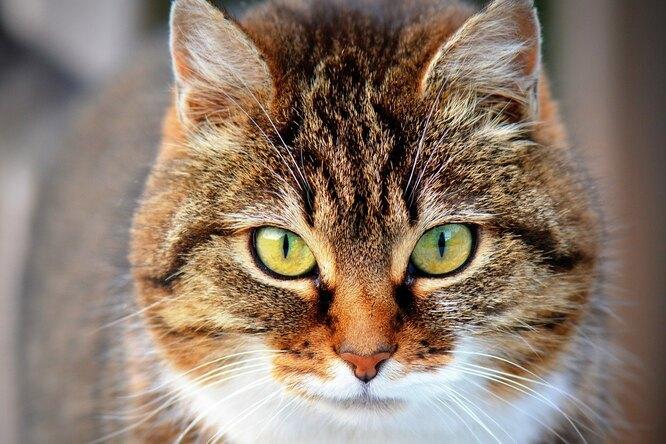 Кот помог спасти годовалого ребенка после гибели матери вквартире