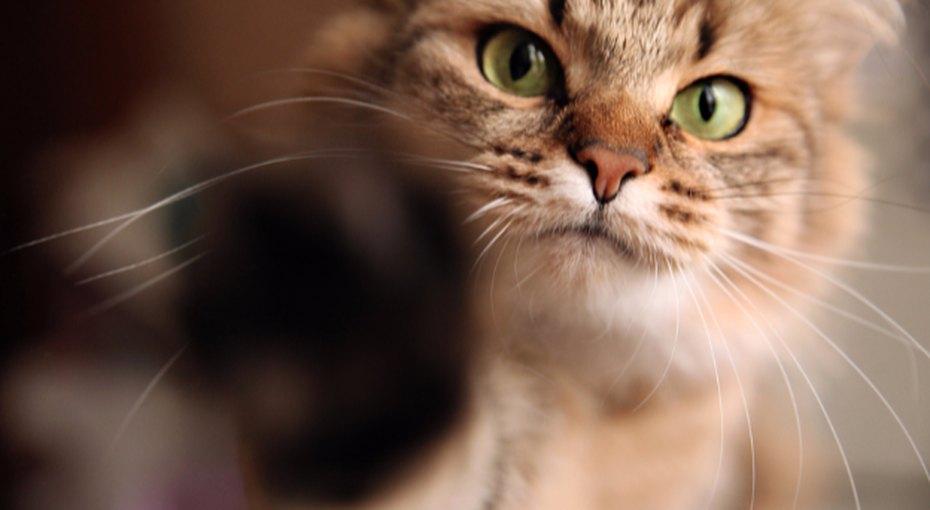 Как сохранить чистоту вдоме, если увас кошка