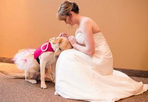 Свадьба, которая не состоялась бы без собаки