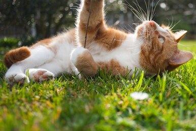 Кошка надаче: чем она рискует?