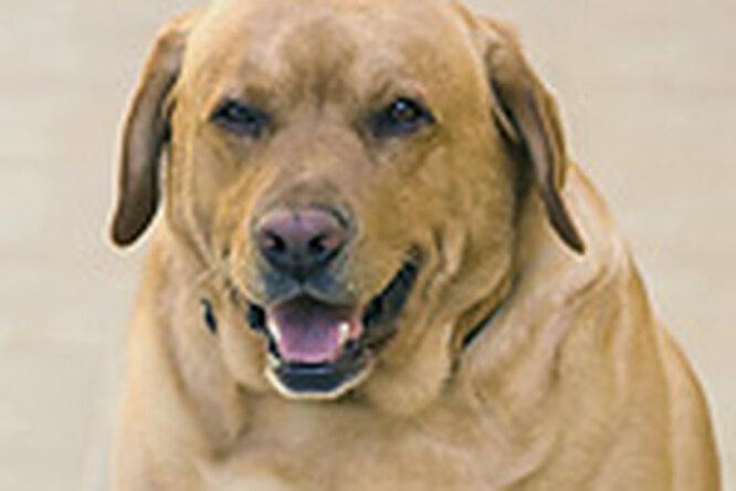 Собака помогла женщине похудеть