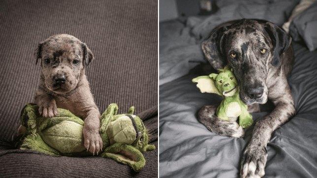 Собака нерасстается сигрушкой ссамого рождения