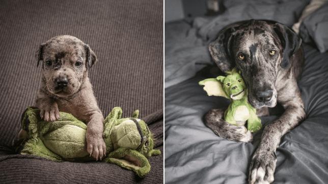 Собака не расстается с игрушкой с самого рождения