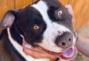 Приютить Ковид: брошенный пес с несчастливой кличкой смог найти любящую семью