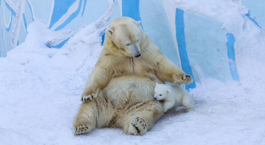 Лучшие мамы насвете: трогательные видео олюбви животных иих детенышей