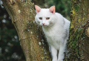 Курьеры службы доставки спасли с дерева кошку после отказа МЧС помочь