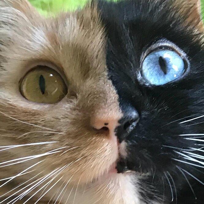 Глаза Химере достались от разных эмбрионов фото