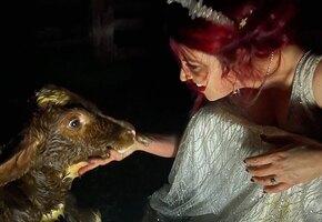 Это так мило: невеста залезла в грязь, чтобы спасти застрявшего телёнка