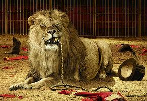 Ужасный цирк: 6 страшных трагедий, падения акробатов и нападения зверей
