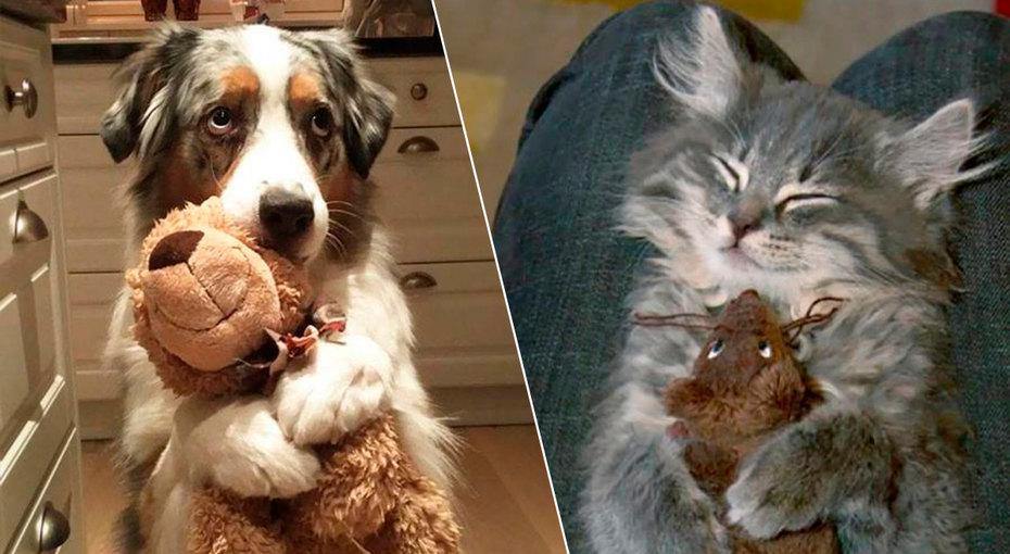 15 смешных фото домашних животных, которые немогут ни дня прожить безлюбимой игрушки