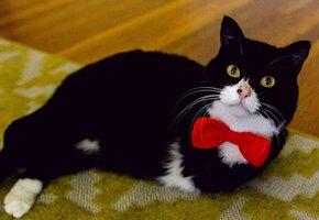Он даже прыгает: кот потерял передние лапы, но не любовь к жизни