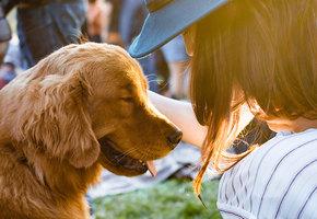 Вот что делает любовь: фото бездомных собак до и после их спасения