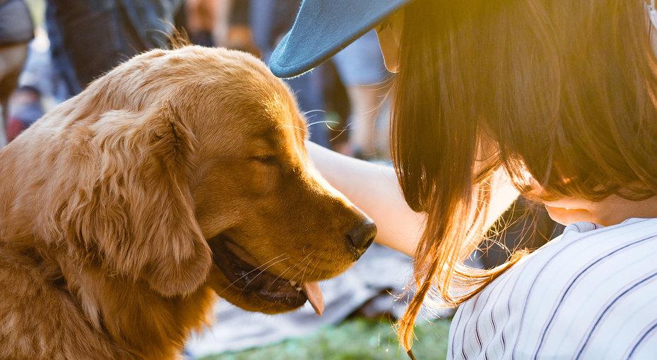 Вот что делает любовь: фото бездомных собак дои после их спасения