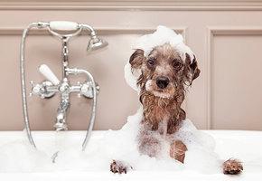 Как справиться с грязью, которую приносят домой животные?