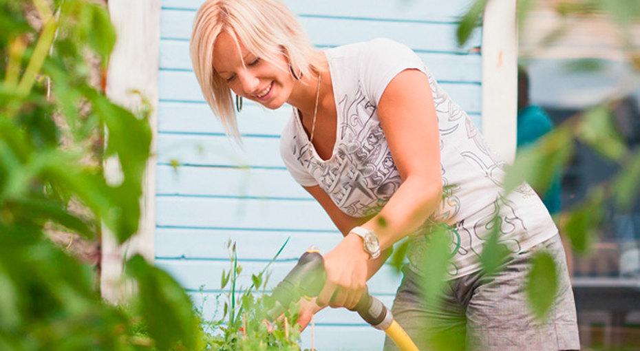 Самые нужные садовые инструменты