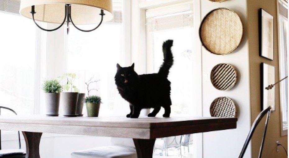 Кошки, грабли, зеркала иподковы: домашние суеверия изразных стран