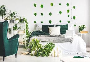 Озеленяемся: 9 комнатных растений, которые растут безсолнца