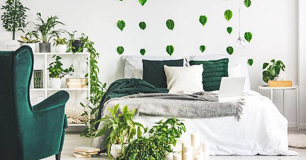 Комнатные растения, которым не нужен солнечный цвет